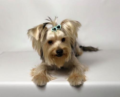 Coafor canin Galati