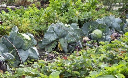 Sezonieri agricultura Germania